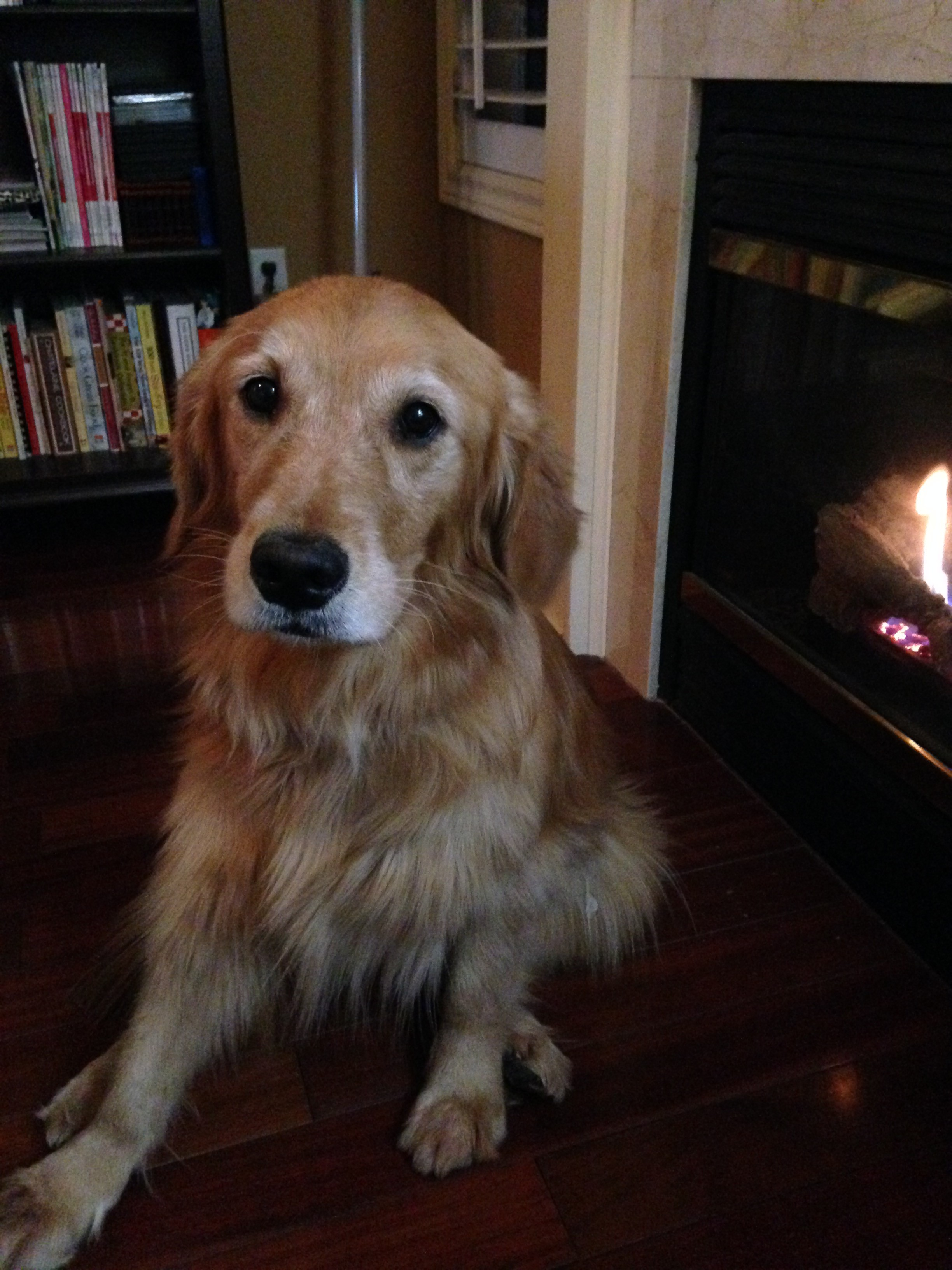 A fireplace and a dog. Perfect :)