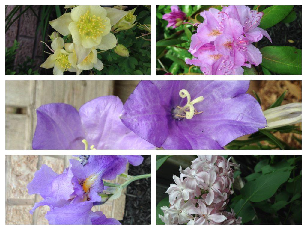 A Farrago of flowers from my garden :D