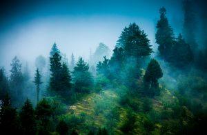 Danu's landscape